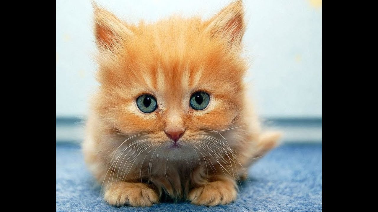 Картинки про котят смешных видео, стихи