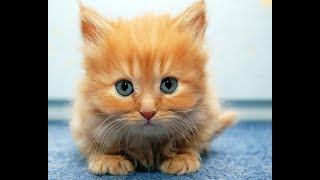 Веселые коты и котята | Топ-подборка видео приколов со смешными кошками