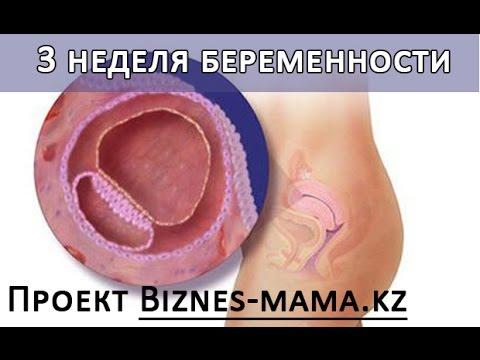 Фото три недели беременности
