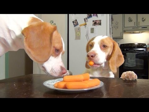 Dog & Puppy Steal Carrots off the Kitchen Table: Cute Dog Maymo & Puppy Penny