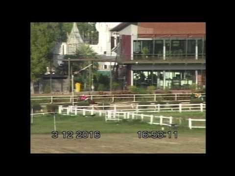 ม้าแข่งสนามโคราช 3 ธค.59 เที่ยว 8 ชิงถ้วยพันเอกพระยาฤทธิรงค์รณเฉท