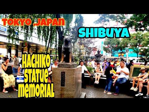 Hachiko Statue Memorial & Shibuya Crossing Tokyo Japan
