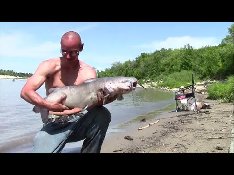 Channel Catfish And Bullhead - Master Fishing At Lockport Mb