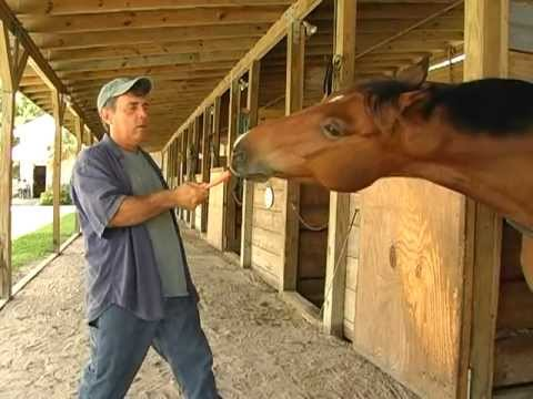Funny talking horse video