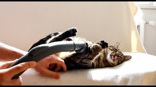 Cat Loves Vacuum Cleaners - Funny Compilation