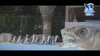 あわしまマリンパーク「夏休みイベント」7月22日~8月27日まで開催中! ...