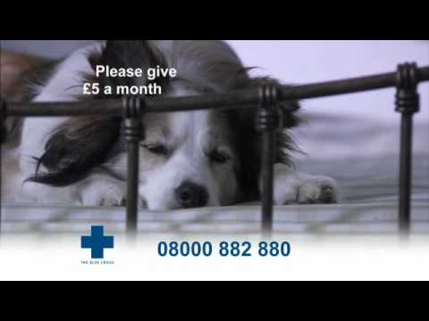 The Blue Cross takes in thousands of unwanted pets each year.