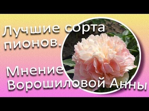 Лучшие сорта пионов. Мнение Ворошиловой А.Б. / Сад Ворошиловой