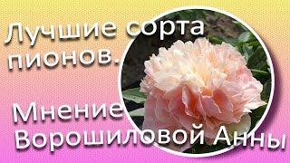 Gambar cover Лучшие сорта пионов. Мнение Ворошиловой А.Б. / Сад Ворошиловой