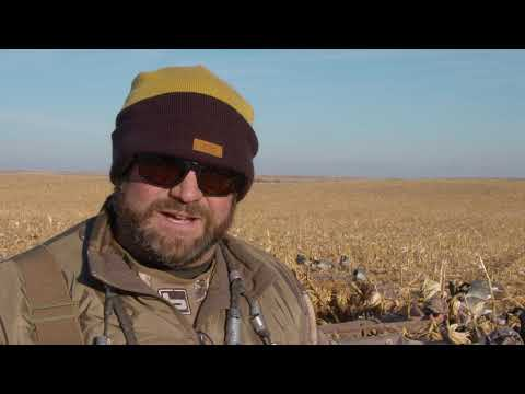 Where To Setup Your Hunting Dog In Dry Field Hunt