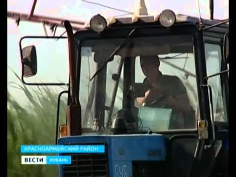 Уборка картофеля в Голландии - YouTube