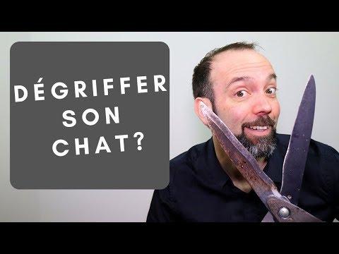 Dégriffer Ou Non Son Chat?