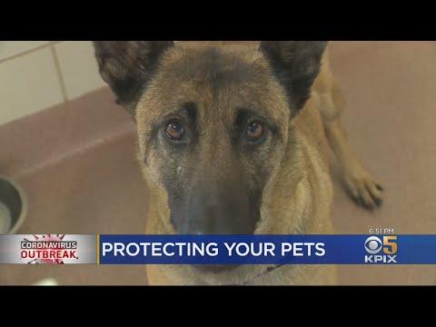 Marin Veterinarian Allays Pet Owners' Fears Amid Coronavirus Outbreak