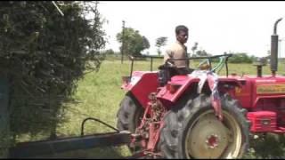 ヘナ遊インディゴ(木藍)農園訪問の記録