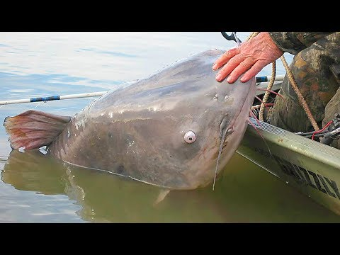 The Next World Record Blue Catfish ?