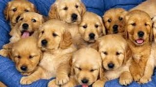 How to train a dog ? - The Benefits Of Early Puppy Training !