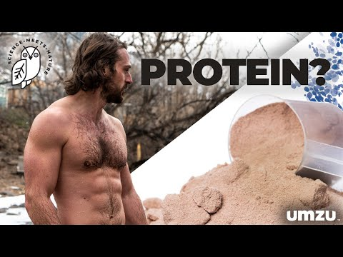 Protein and Testosterone: Lower Protein Intake, Boost Testosterone Levels?