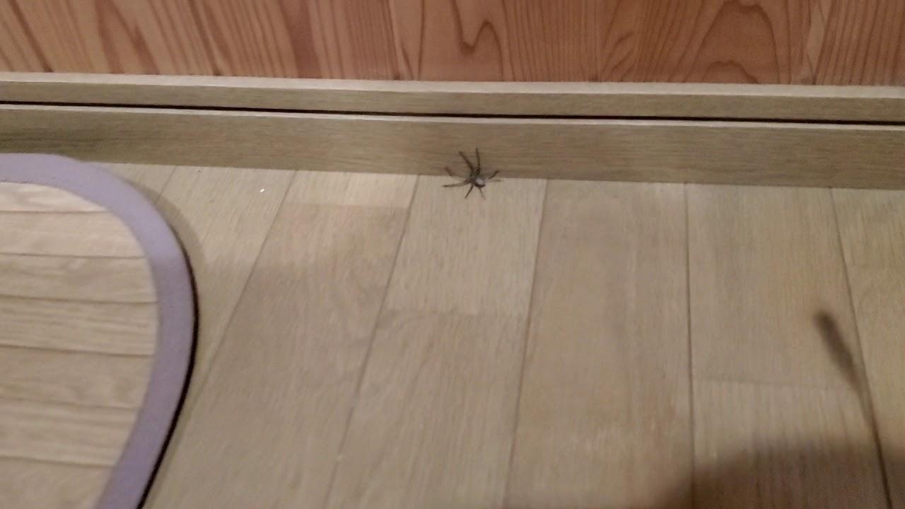蜘蛛 軍曹