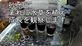 エビ造のアクアリウム ショットグラスで水草育成? thumbnail