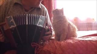 Животные. Кот поет. Сказочный рыжий кот любит гармонь.