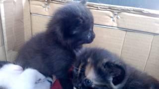 Кошка родила, раздаём котят =)