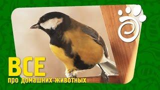Веселая Птичка Синичка (Часть Первая). Все О Домашних Животных