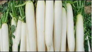 मूली खाओ पीलिया भगाओ  || Ayurved Samadhan ||