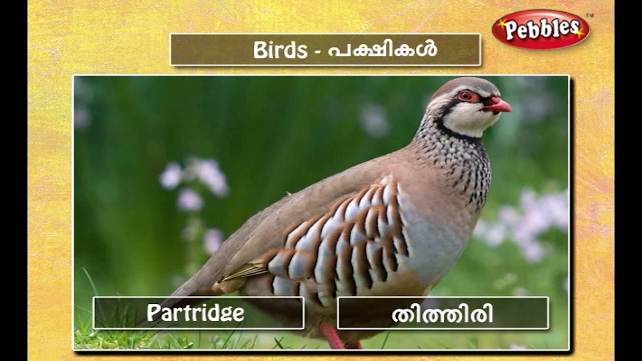 Speak Malayalam Through English Spoken Malayalam Lesson 03 Birds Youtube
