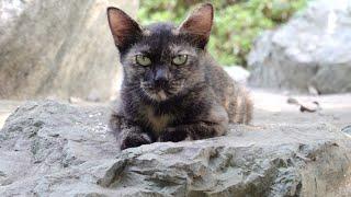 茂みの中を覗くと、石碑の上でサビ猫と茶シロ猫がくつろいでいた
