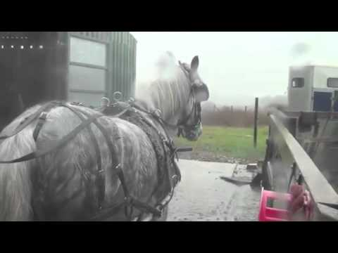 teach a horse that fidgets in harness to stand still. - YouTube