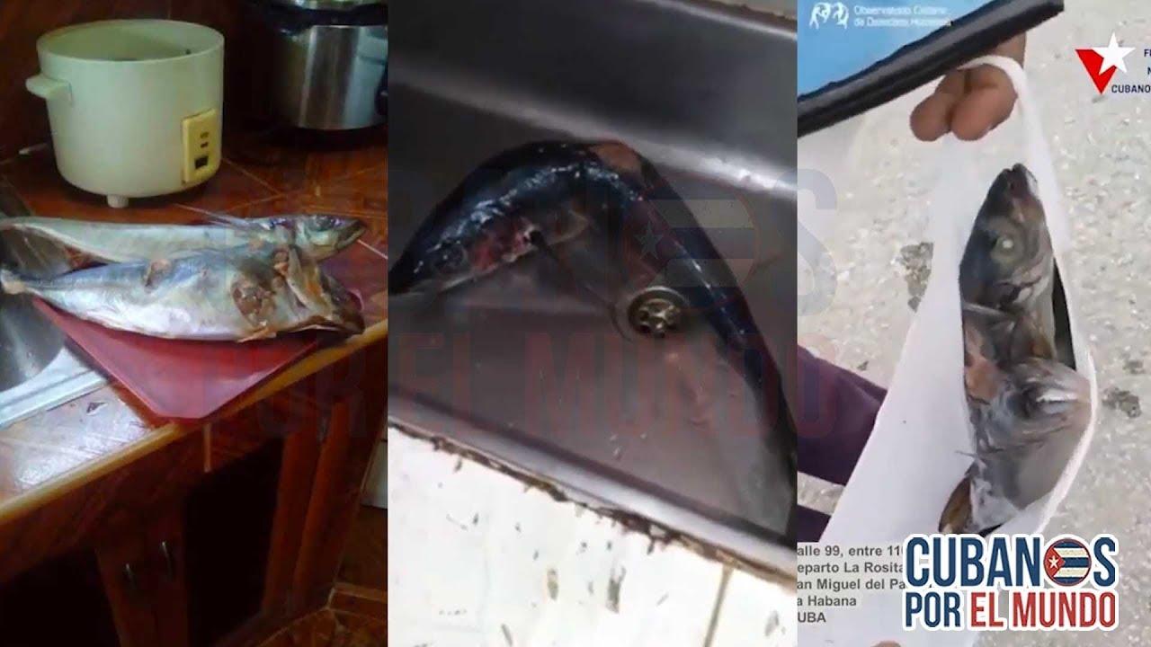 En Cuba no todo el mundo puede comprar pescado; porque 20 pesos la libra es muy caro