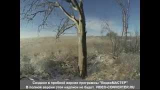 Охота на волка в Украине