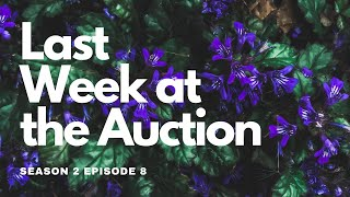 Last Week at the Auction - Top 10 Results Show (S2 Ep8) PBS