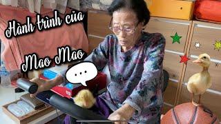 Chú Vịt Mao Mao LỚN LÊN CÙNG NỘI THẾ NÀO? Hoon đòi bỏ em vì quá xấu (Cuộc sống Hàn Quốc)