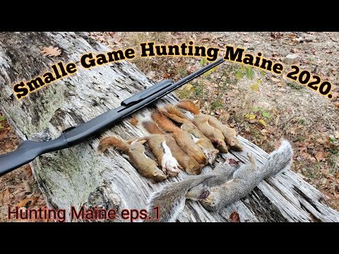 Small Game Hunting Maine 2020/ Red And Gray Squirrels.