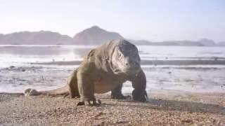 ЖУК ПАУК   познавательный канал о природе