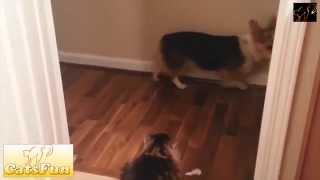 Собаки боятся пройти,пока отдыхает кот!