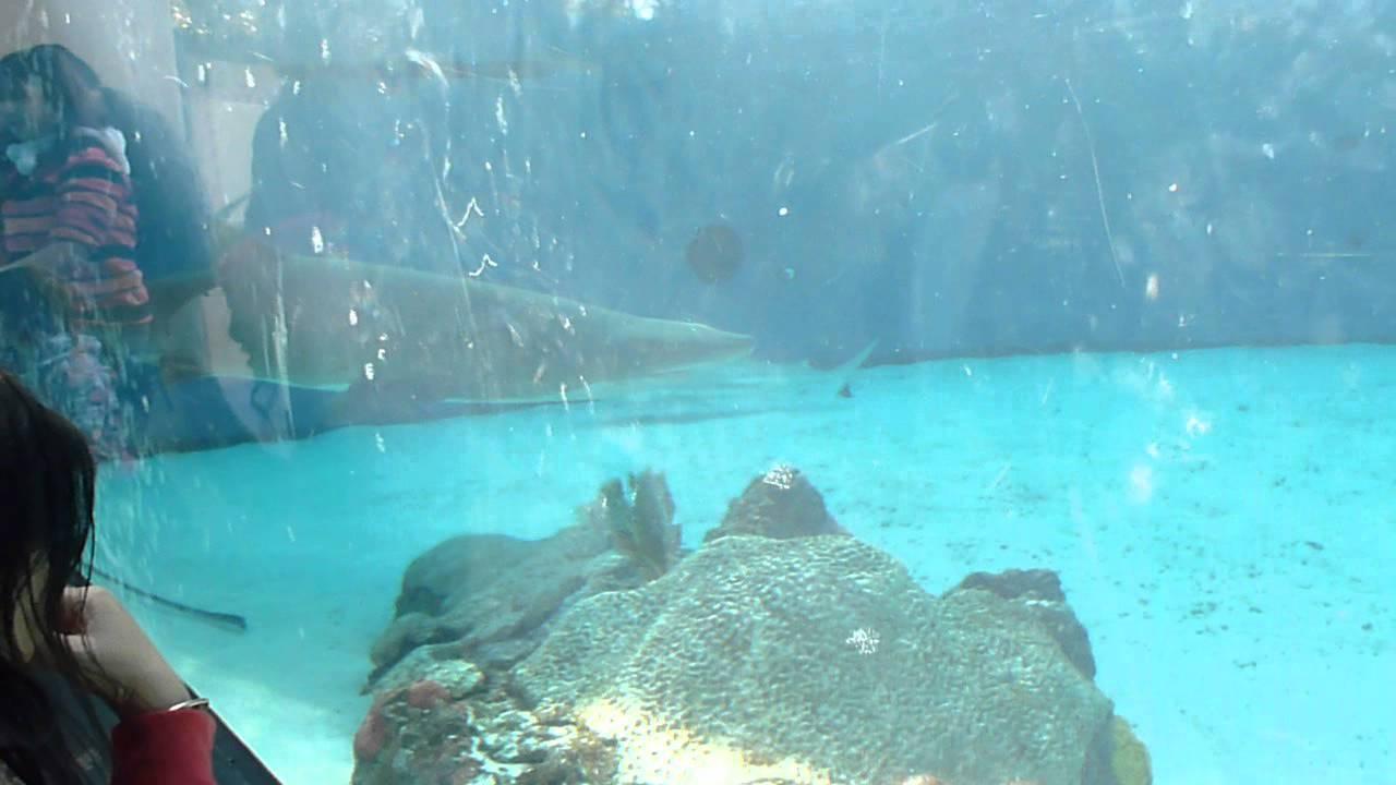 Tiburones En El Acuario De Long Beach C A