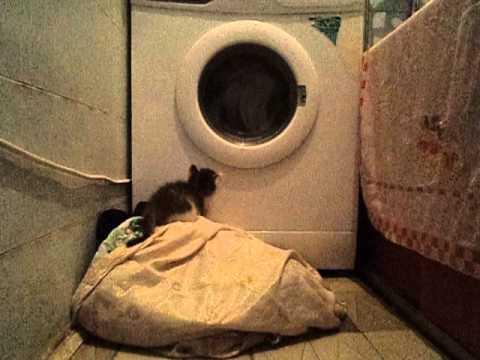 Игра со стиральной машиной