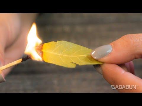 Mira por qué debes quemar una hoja de Laurel en tu casa