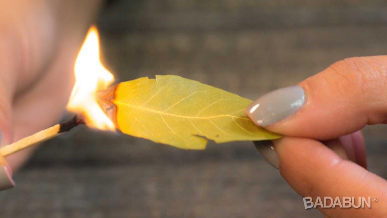 Quemar hojas de laurel para q sirve