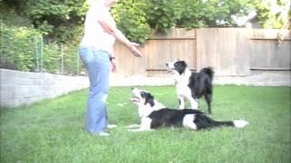 Double Dog Dare: Clicker Dog Training Tricks