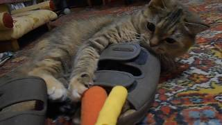 Кошка Ромашка. Захват тапка))
