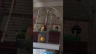 Секс попугаев)))
