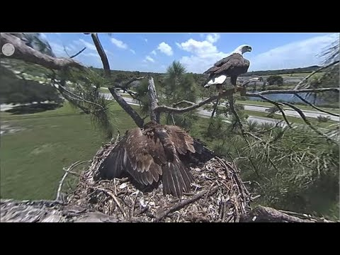 SWFL Eagles ~ DaddyDash Delivers Room Service Squirrel! 😄 E15 Eats & Spends Time At Pond! 8.24.20