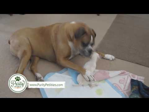 Funny, Silly & Smart Dog Video Compilation - PurityPetibles
