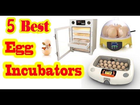 Best Egg Incubator To Buy In 2020