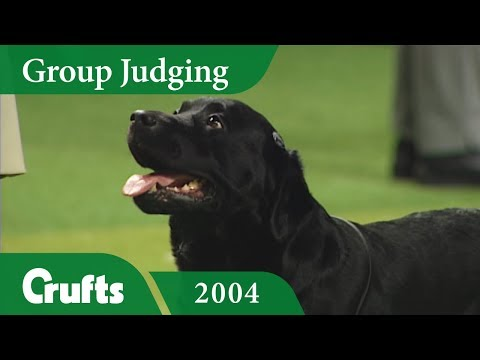 Labrador Retriever wins Gundog Group Judging at Crufts 2004