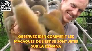MAROC ALGERIE : BANANE DANGER ZOO DE L'EST (DIASPORA)