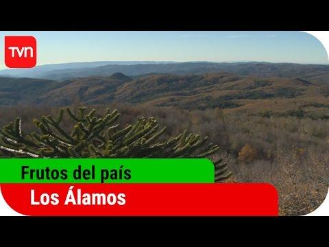 Frutos del País | T12E02: Los Álamos